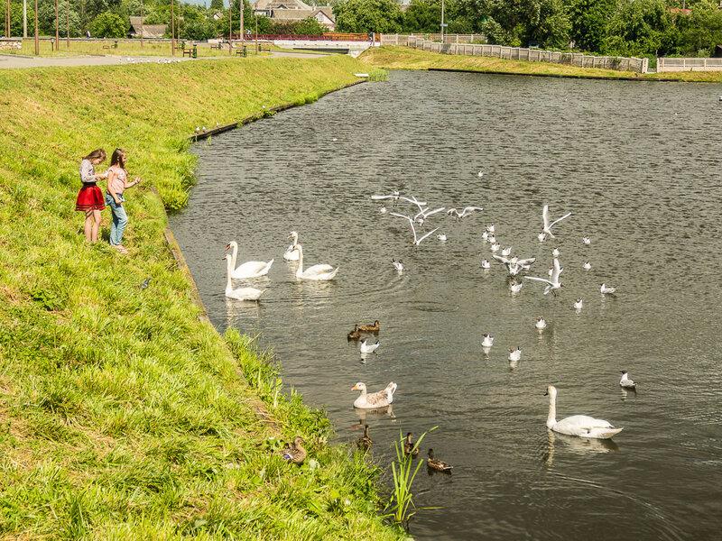 Девочки кормят птиц в Замковом озере.