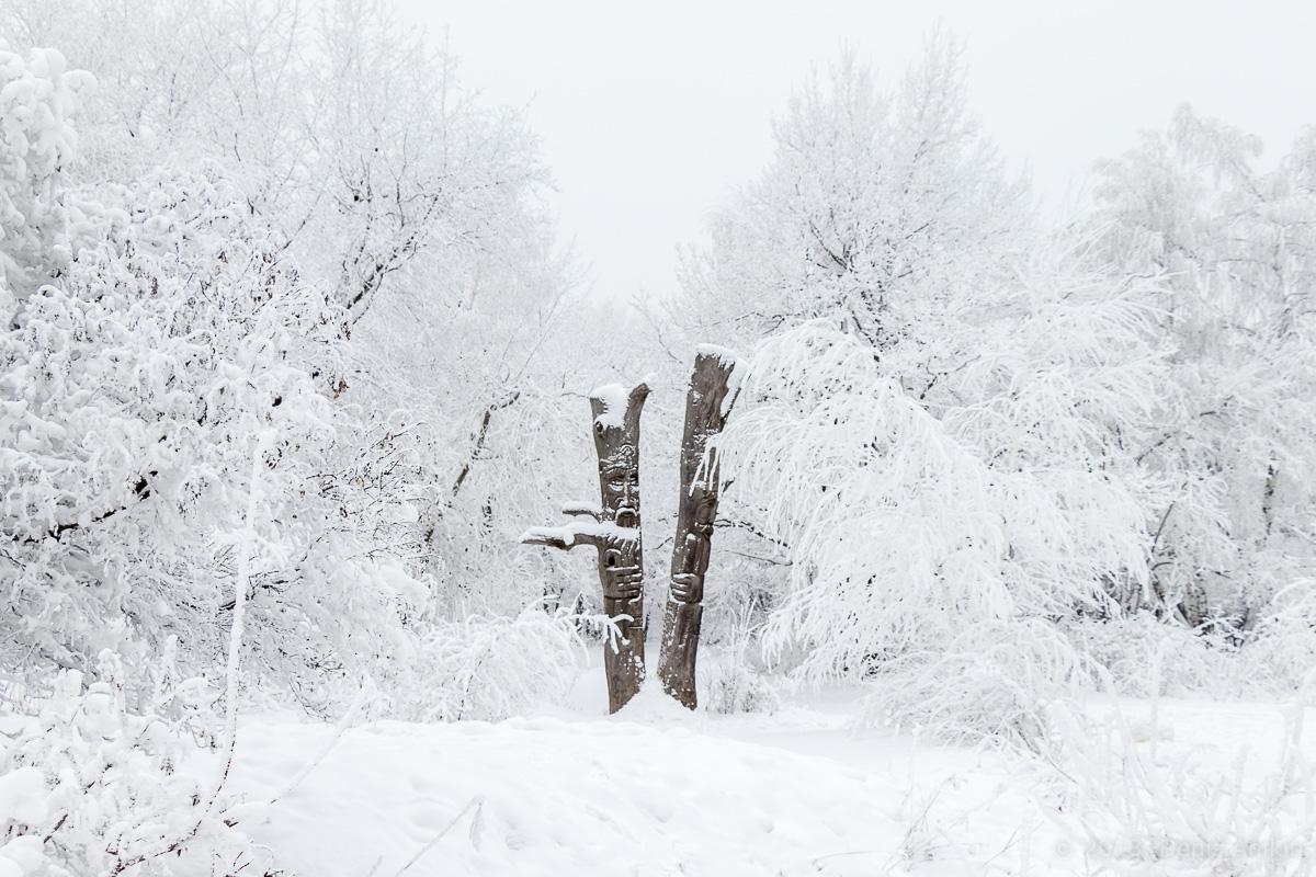 зима лес кумысная поляна фото 5