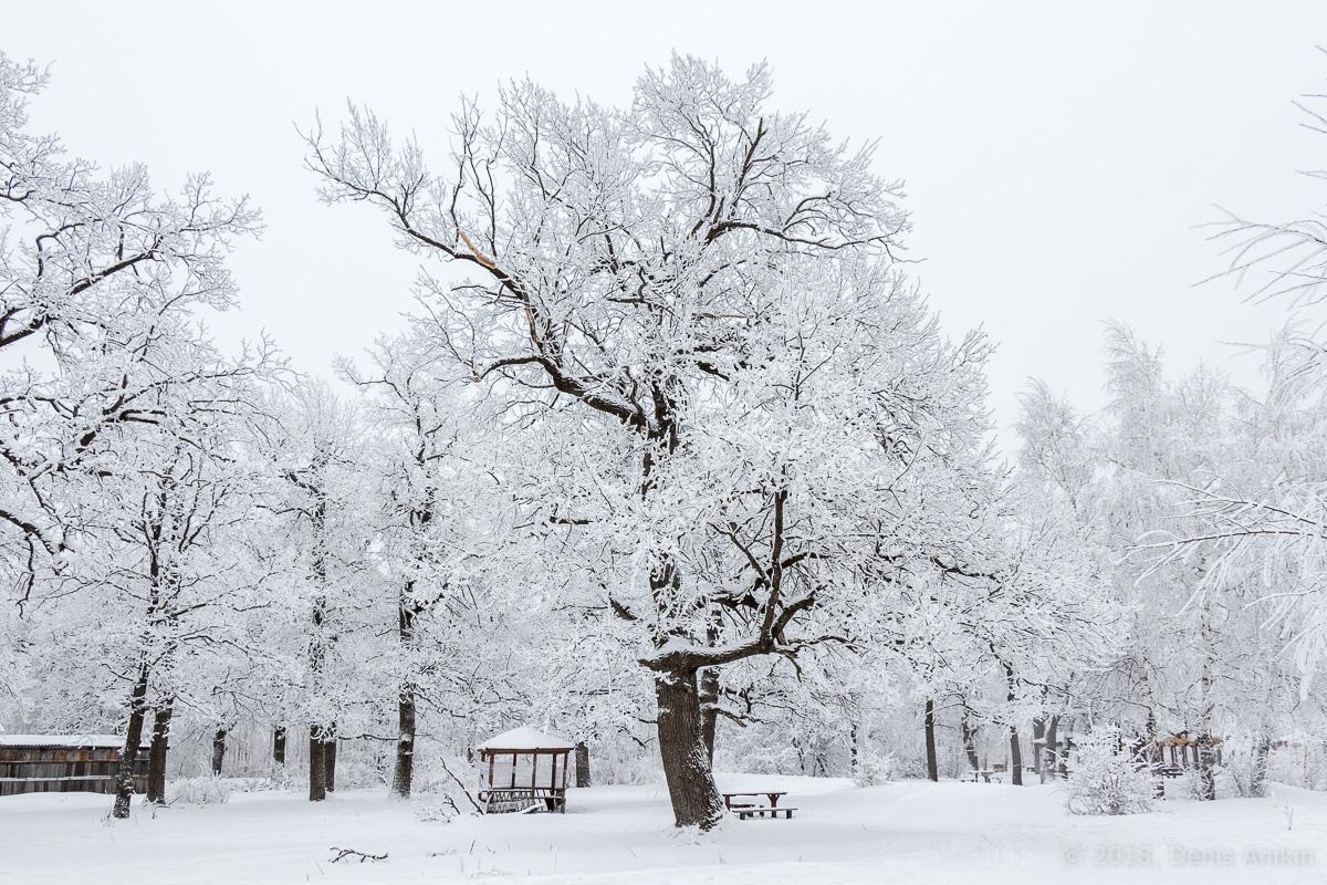 зима лес кумысная поляна фото 6