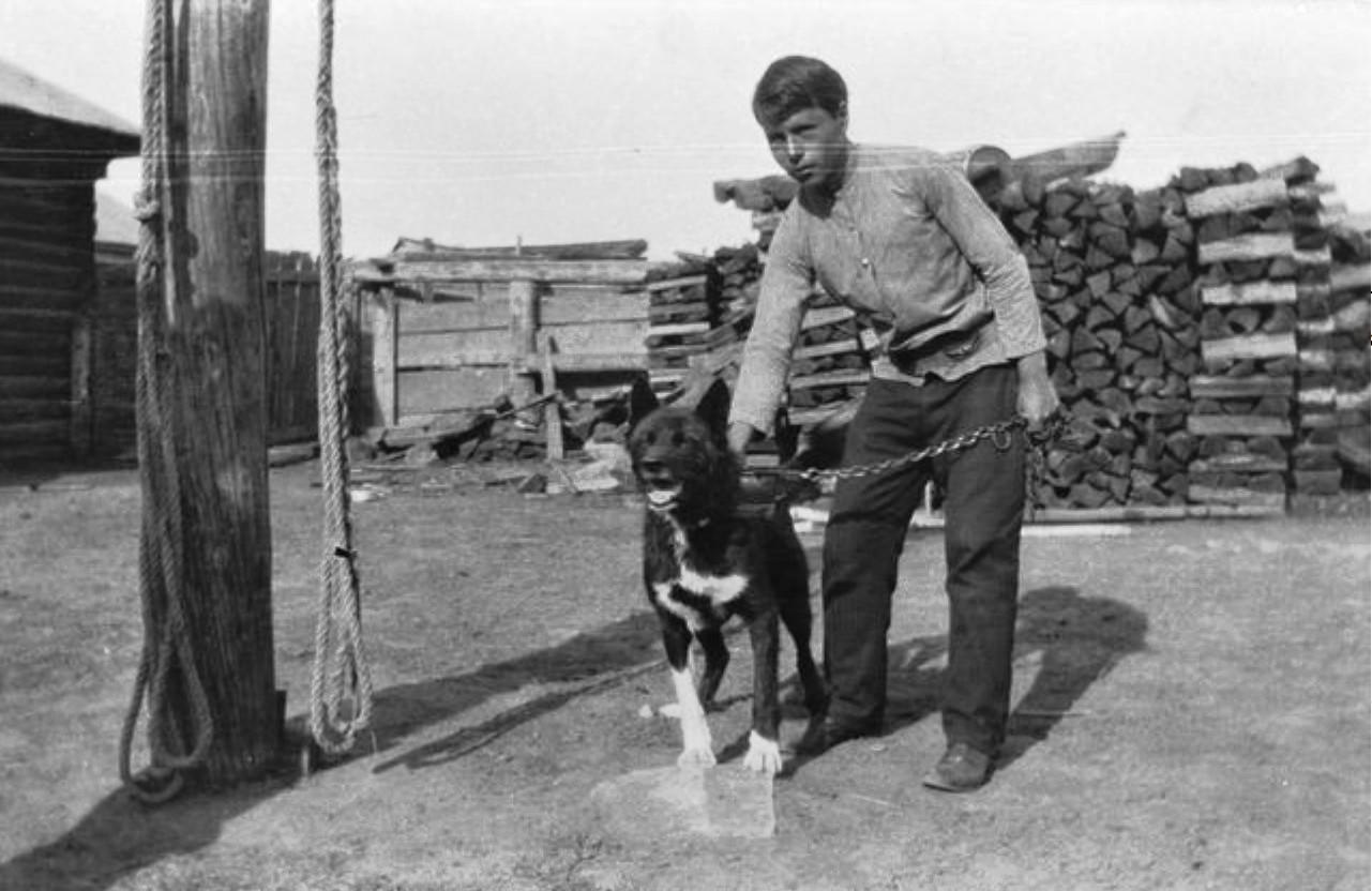 Племянник И. И. Бердникова и тунгусская собака