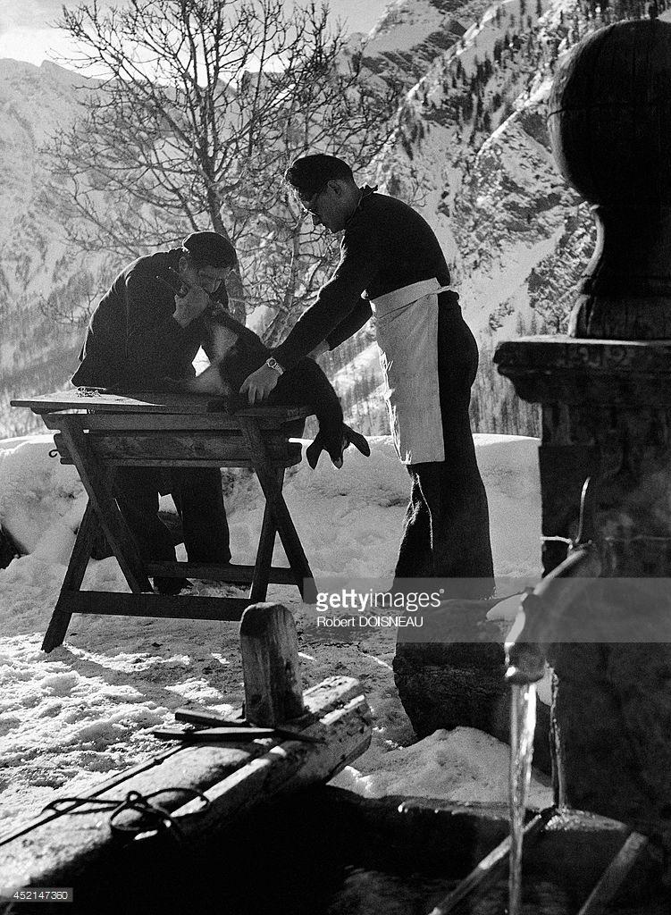 1947. Двое мужчин режут козленка в Сен-Веране