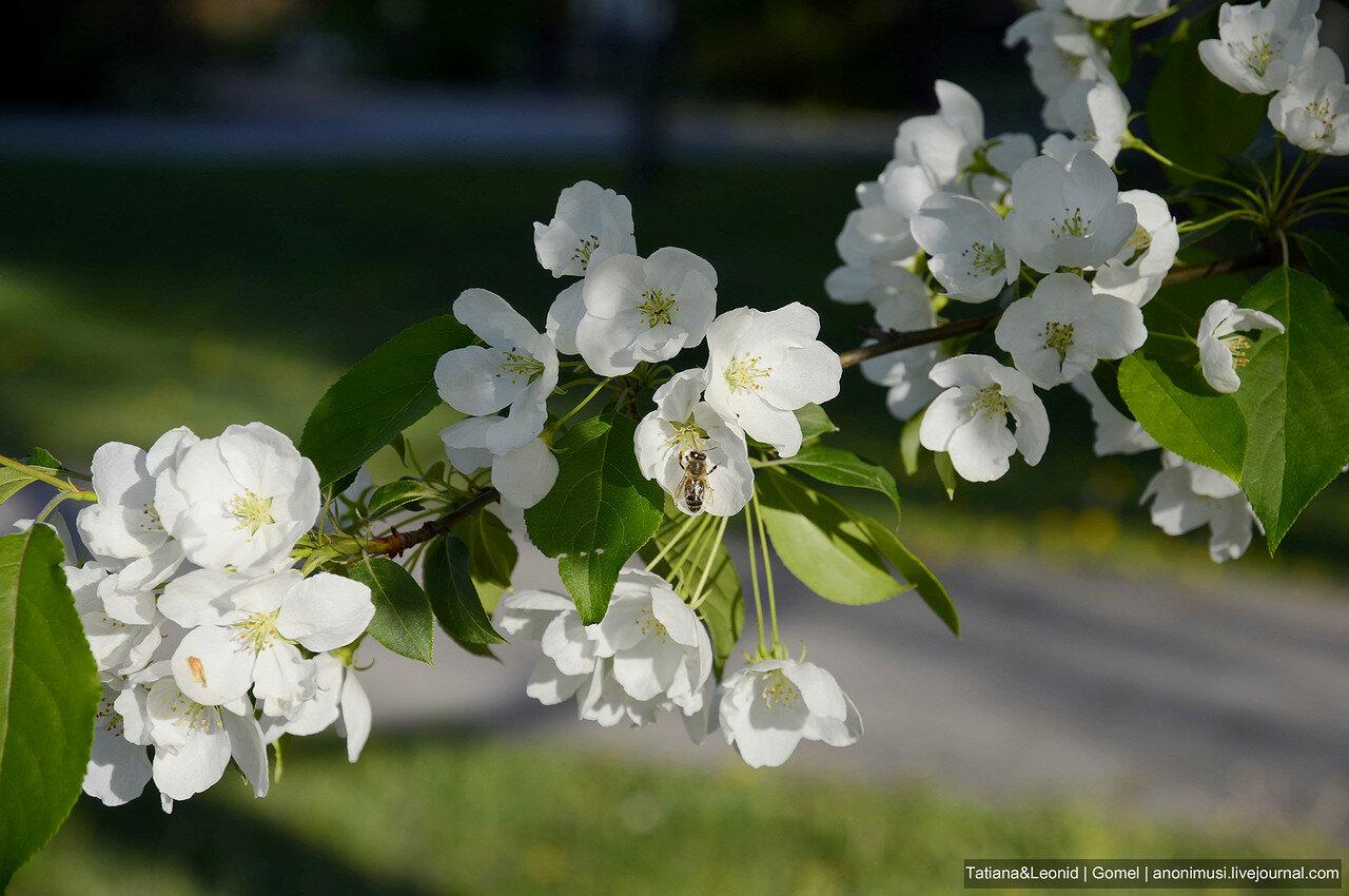 Цветет весна