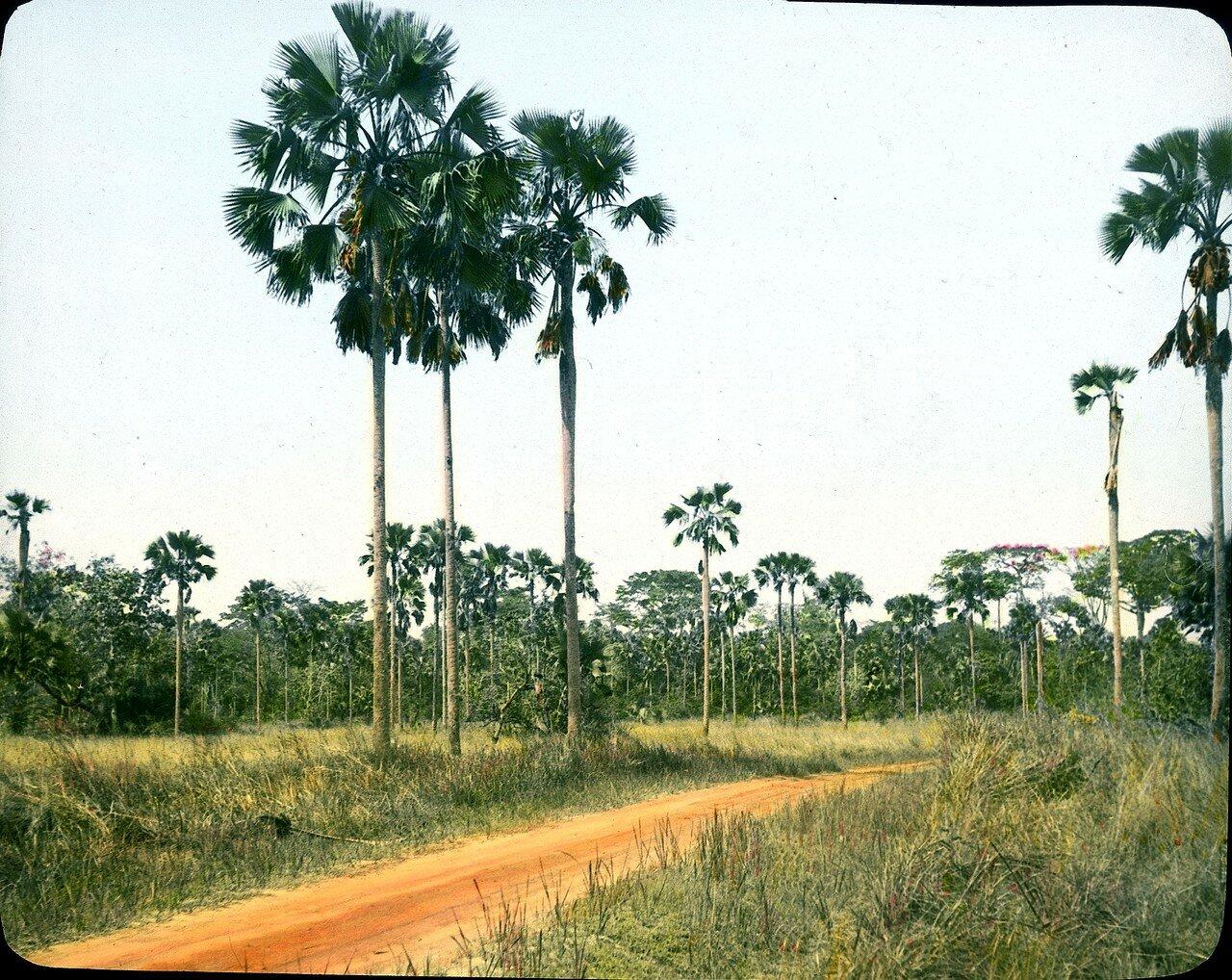 Берег Слоновой Кости. Саванна в окрестностях Тумоди