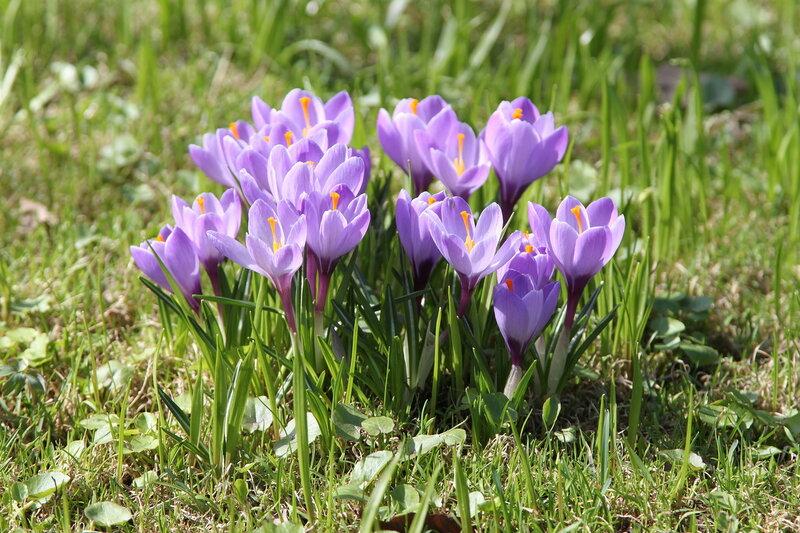 Апрель в Аптекарском огороде