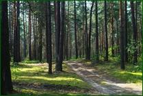 http://img-fotki.yandex.ru/get/51827/15842935.370/0_ea07a_c2617b30_orig.jpg