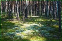 http://img-fotki.yandex.ru/get/51827/15842935.371/0_ea080_18e217dc_orig.jpg