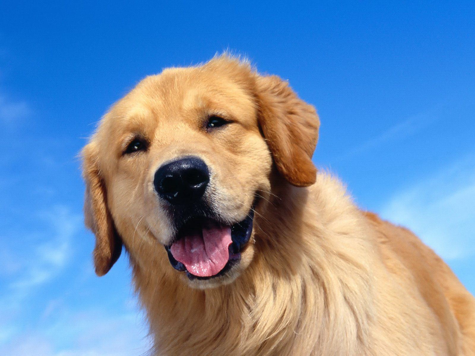 Радісний пес