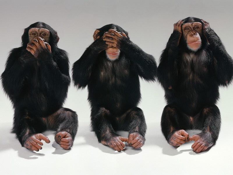 Три шимпанзе