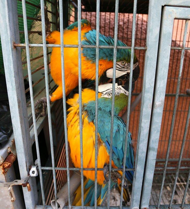 Влюбленные попугаи (Альмуньекар, Сад-музей Бансай)