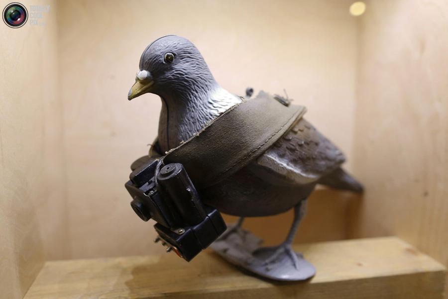 6. Макет голубя с маленькой камерой.