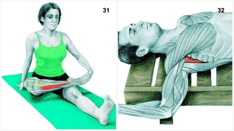 32. Растяжка подлопаточной мышцы лежа.33. Растяжка в позе Собаки с упором на стену длямышц груд