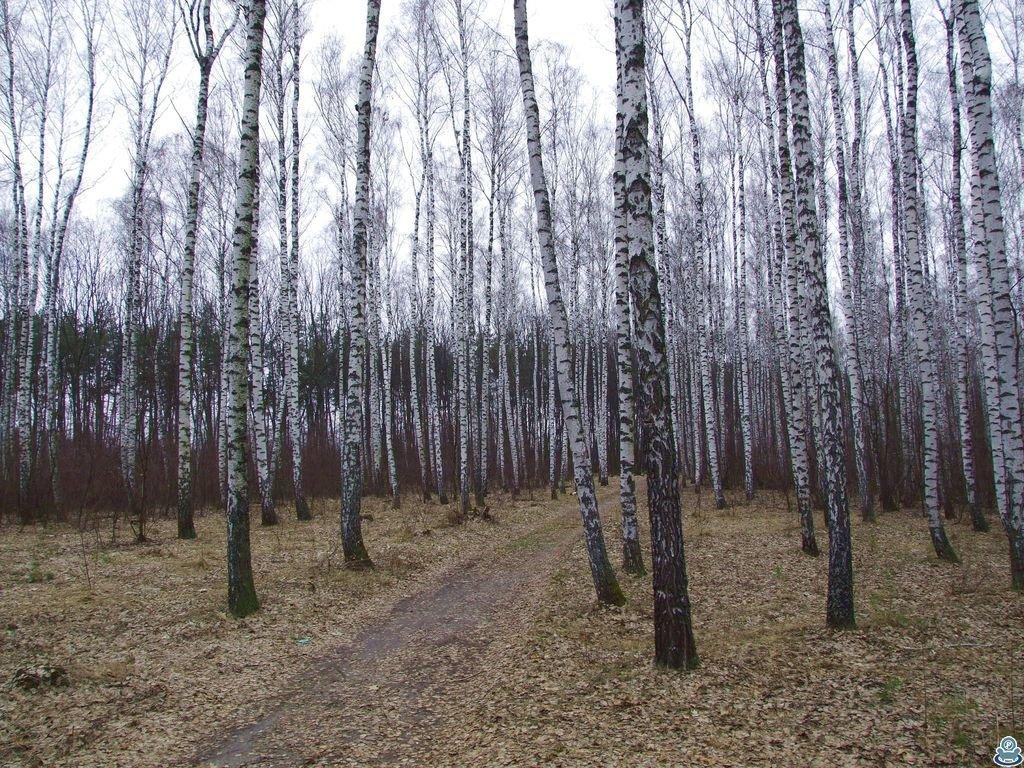В юбилейном лесу