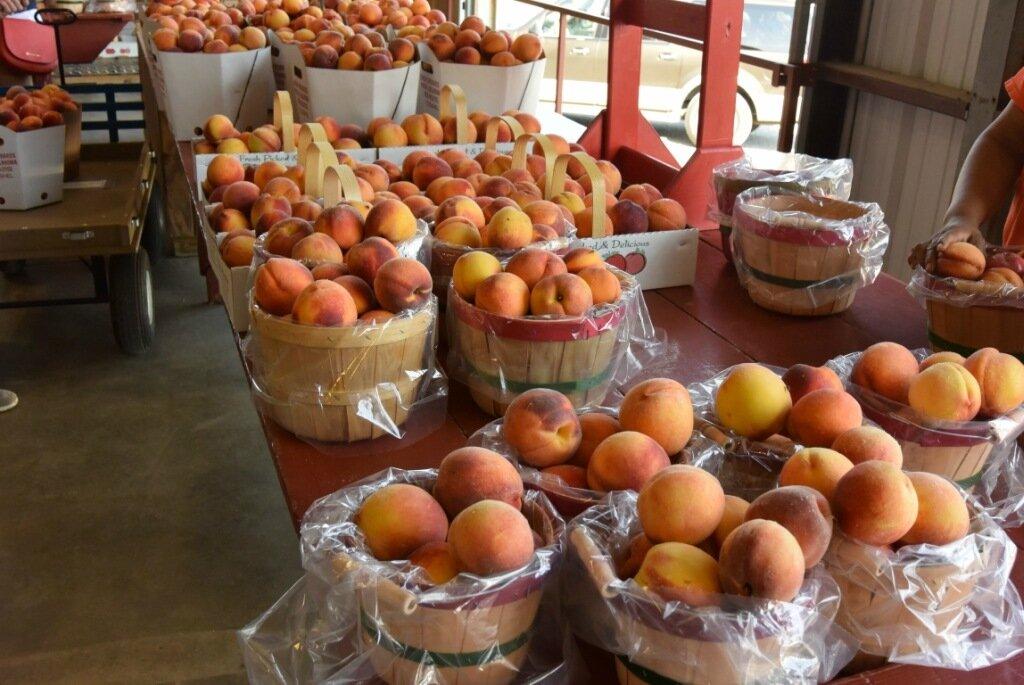 Один мой день на персиковой плантации в Оклахоме