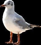 MRD_SeaMemories_bird.png