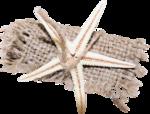 MRD_SeaMemories_starshell-cloth.png
