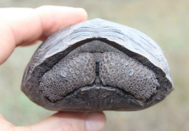 На Галапагосских островах родились первые черепашата за последние сто лет