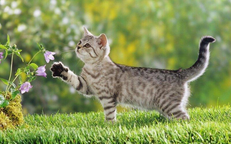 царапанье  - способ пометить территорию кошки