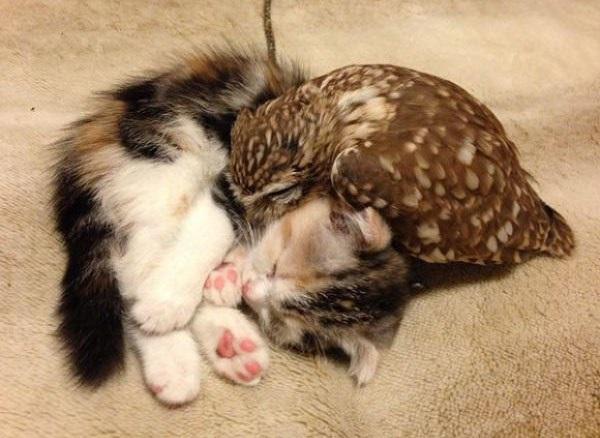 Новости дня: Дружба котенка и совы: Мимимишные фото и видео взорвало Интернет - 04.07.2015 сегодня - Dialog.ua