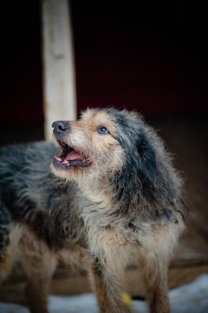 Борода собака из догпорта