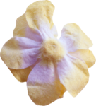kimla_always_flower3.png