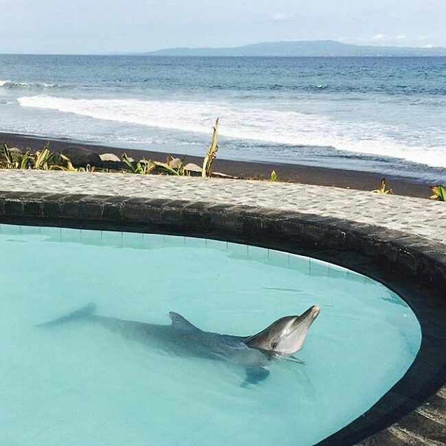 Застрявшие на Бали туристы публикуют фото своих мучений