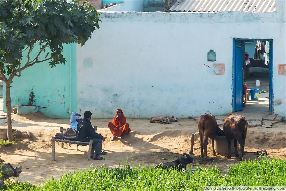 Индия, обочина