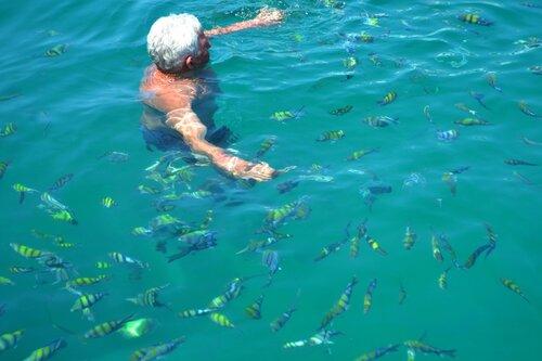 Поплавать с рыбками