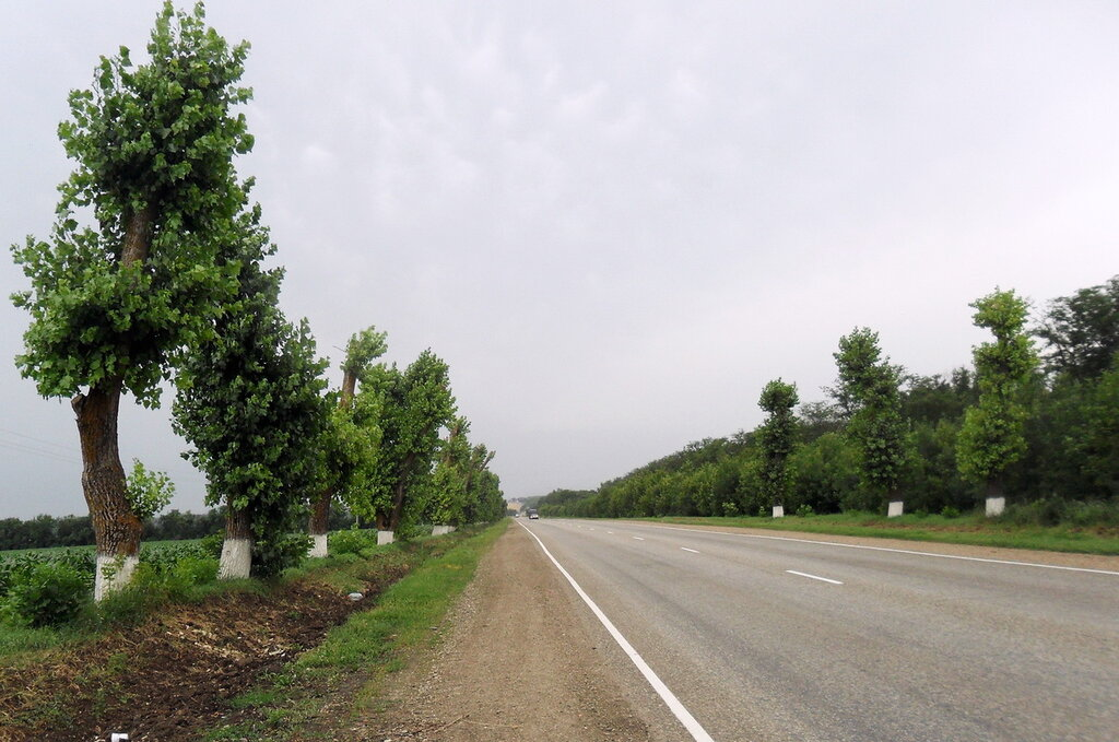 В дороге, Кубань, июнь 2012