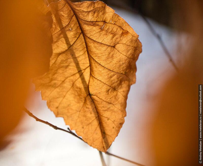 взгляд на лист сквозь листья