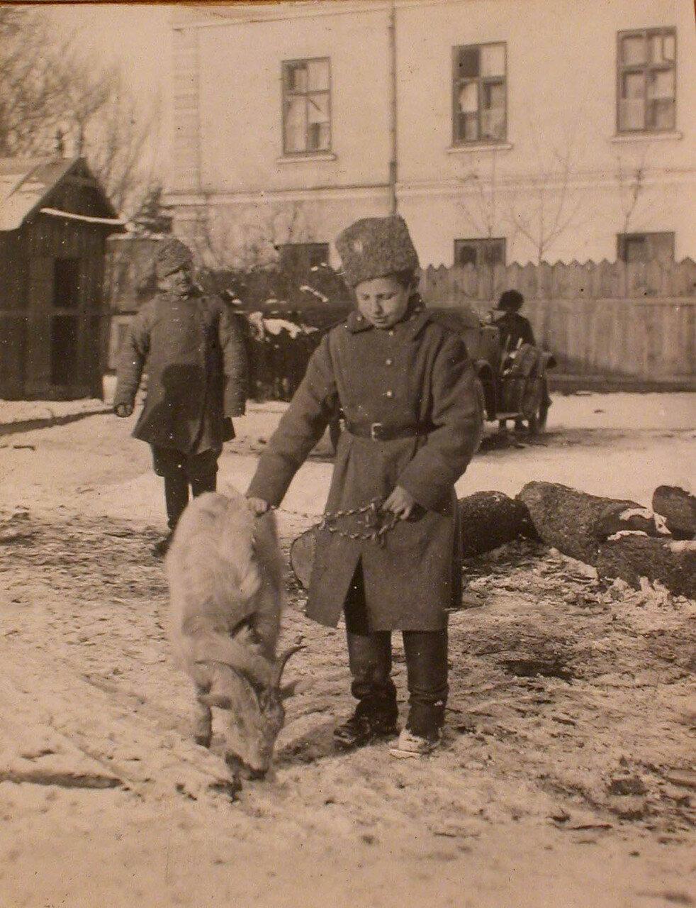 17. Санитар отряда Ванька, с питомцем - козлом Васькой. Галиция, Тарнополь