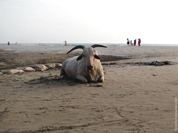 Индия. Северный Гоа. Пляж Арамболь.