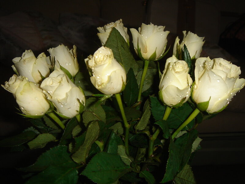 Белые розы в подарок это 339
