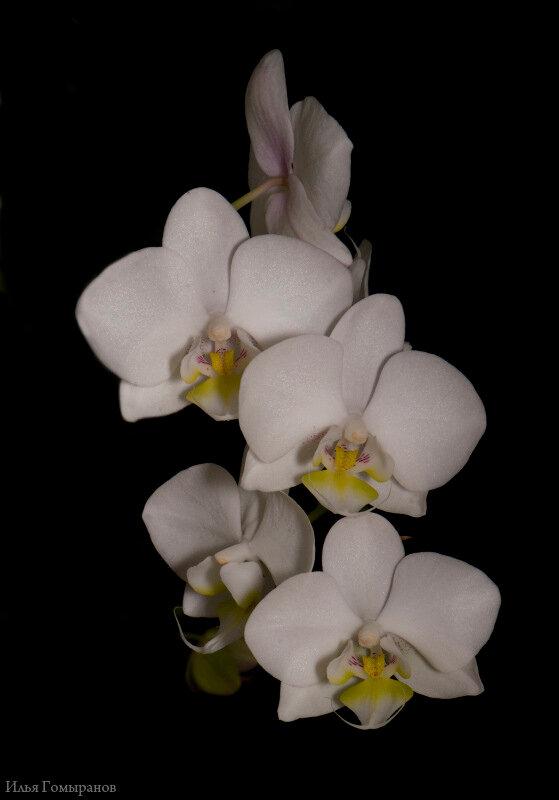 Цветы и растительность в нашем доме)