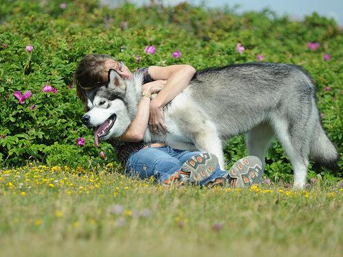 http://img-fotki.yandex.ru/get/52/malamute-akbar.38/0_29120_720e86a9_L.jpg