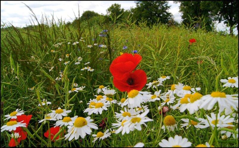 Притча о полевом цветке