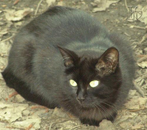 О чем задумался Черный кот?