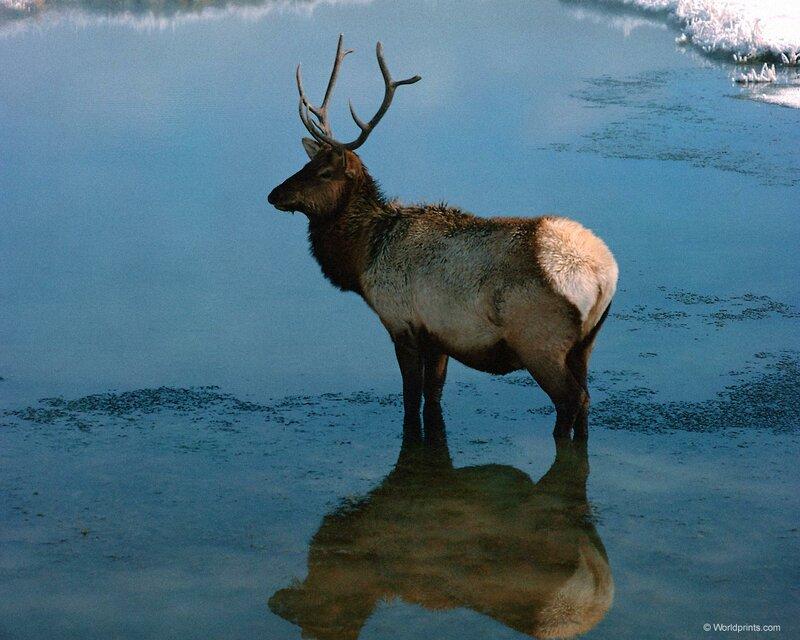 Шикарные фотографии диких животных!