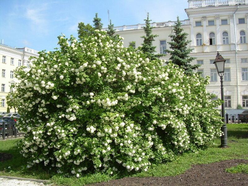 http://img-fotki.yandex.ru/get/52/zara-skvortsova.3/0_d4ac_2de1645f_XL