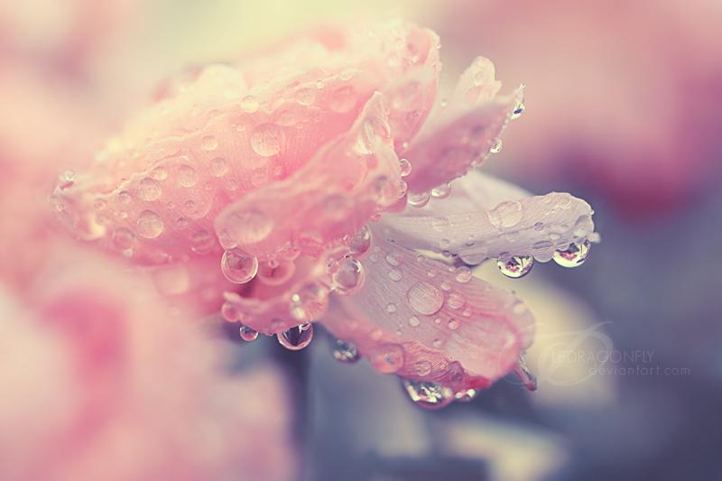 Нежные красивые цветы картинки