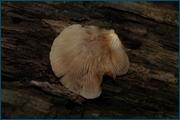http://img-fotki.yandex.ru/get/5200/15842935.146/0_d0c94_e06c9bdc_orig.jpg