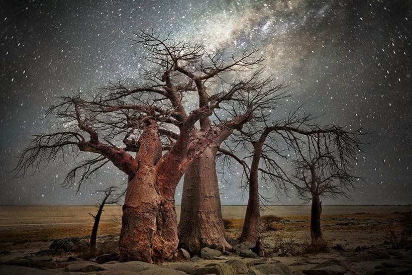 Фотограф Бет Мун: древние деревья Африки под звездным небом 0 136236 4d50a92d orig
