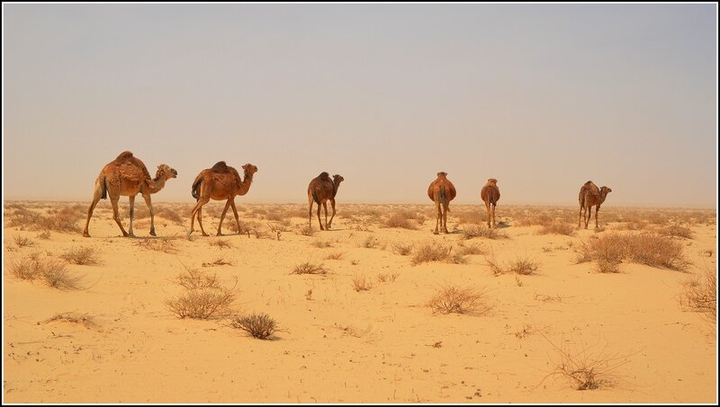 Пресс-тур в Тунис (путевой дневник)