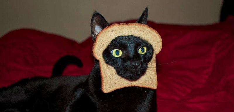 14. Если у вас нет даже пельменей, на четвертый день кошка с удовольствием ест хлеб.