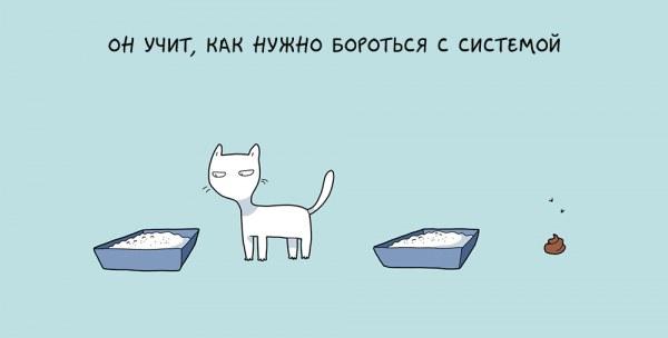 10 преимуществ жизни с котом в картинках
