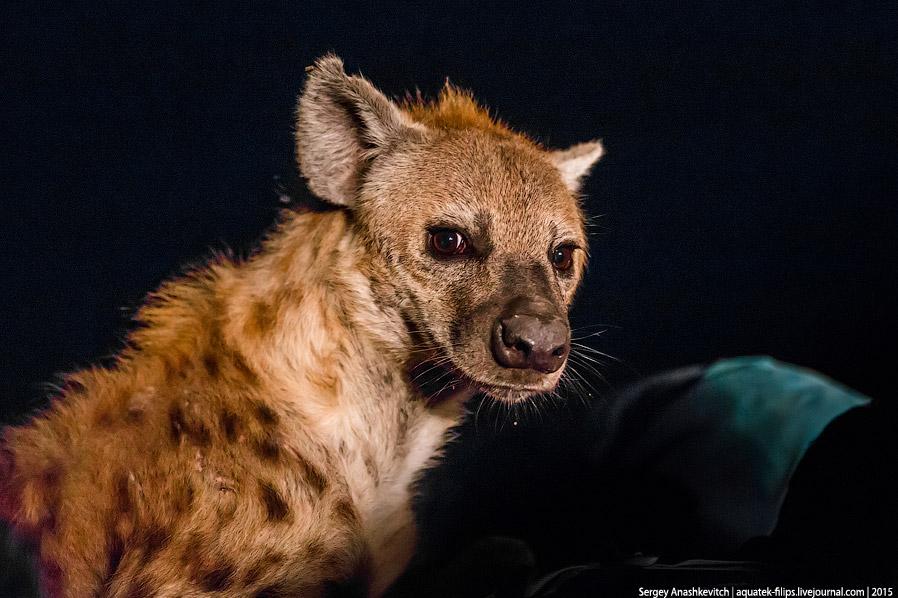 13. Фотографии, конечно, не передают звуков, с которыми эти животные ели и выясняли, кому брать