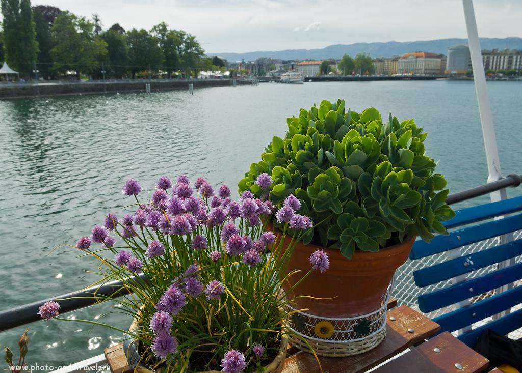Фото 13. Поездка в Швейцарию в командировку. Прогулка по Женеве. Обычный клевер в необычном месте