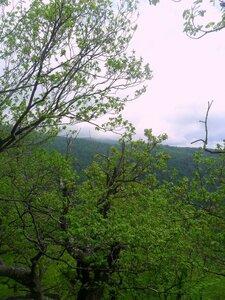 Леса горные ... SAM_6952.JPG