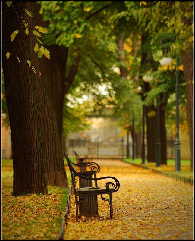 Утро в Михайловском саду
