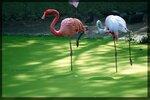 Фламинго: две ноги на двоих