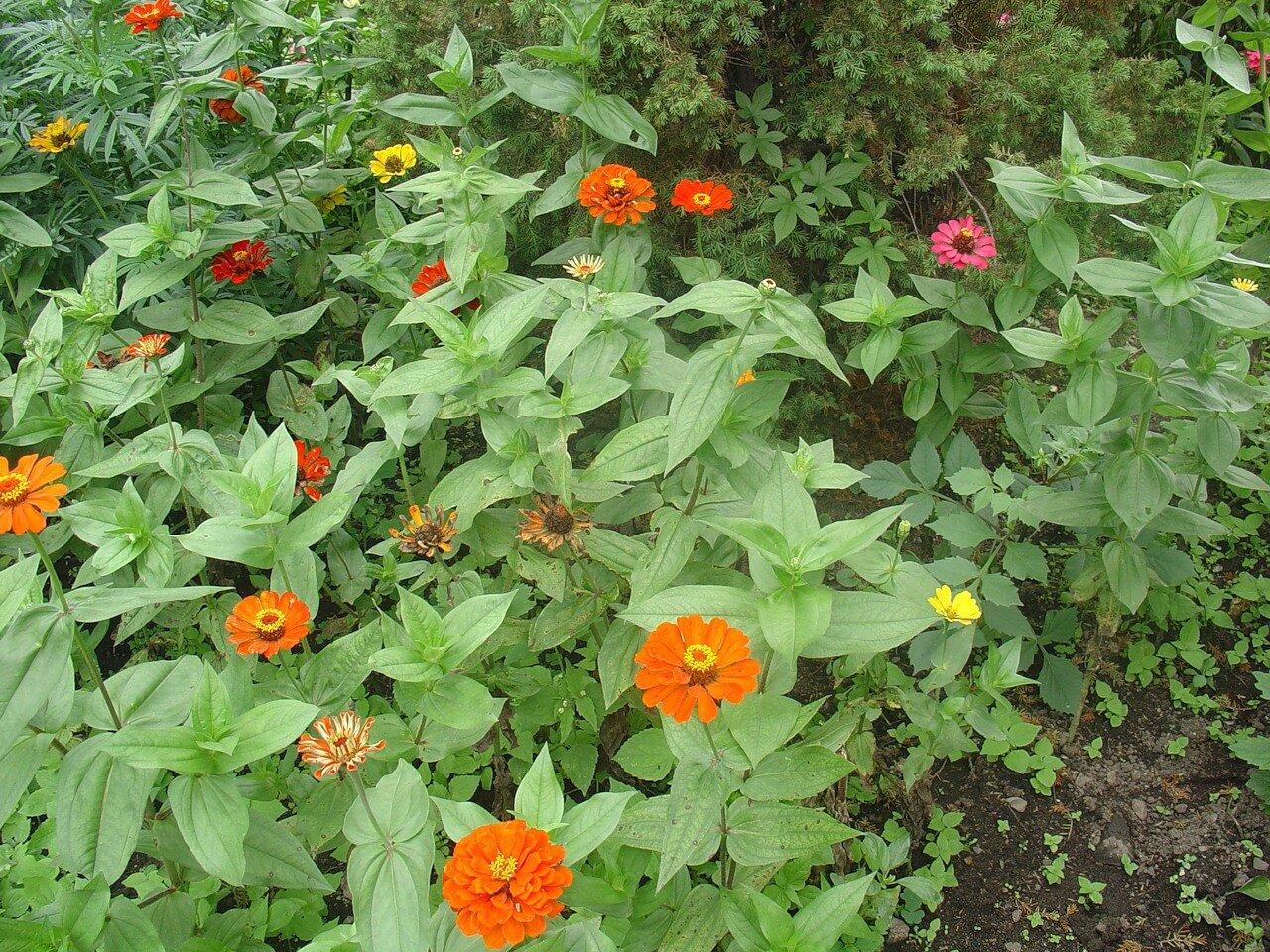 Владивосток. Ботанический сад. цветы.